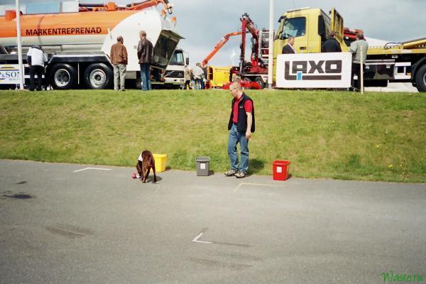 Дресиированная собачка демонстрирует насколько просто сортировать мусор