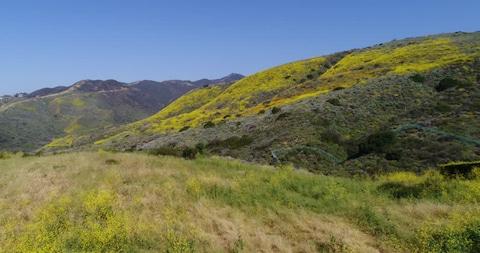 Цветы на отвалах горных пород
