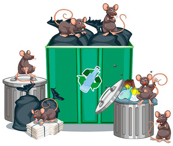 Накопление твердых коммунальных отходов